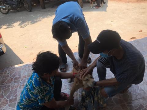โครงการฉีดวัคซีนป้องกันโรคพิษสุนัขบ้าในสุนัขและแมว ประจำปีงบประม